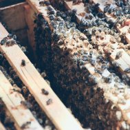DEN BIENEN SEI DANK - I LOVE YOU(R) HONEY , Bild 5/22