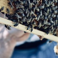 DEN BIENEN SEI DANK - I LOVE YOU(R) HONEY , Bild 9/22